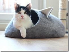 Cat in Cave